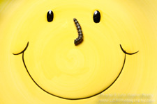 Smiley Face Caterpillar - Copyright - Lon Casler Bixby - www.lcbphotography.com - All Rights Reserved